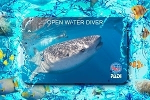 Replacement PADI Certification Cards